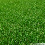 gazon-grass
